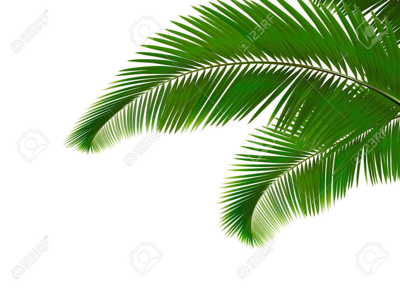palm leaves on white background royalty free cliparts vectors and