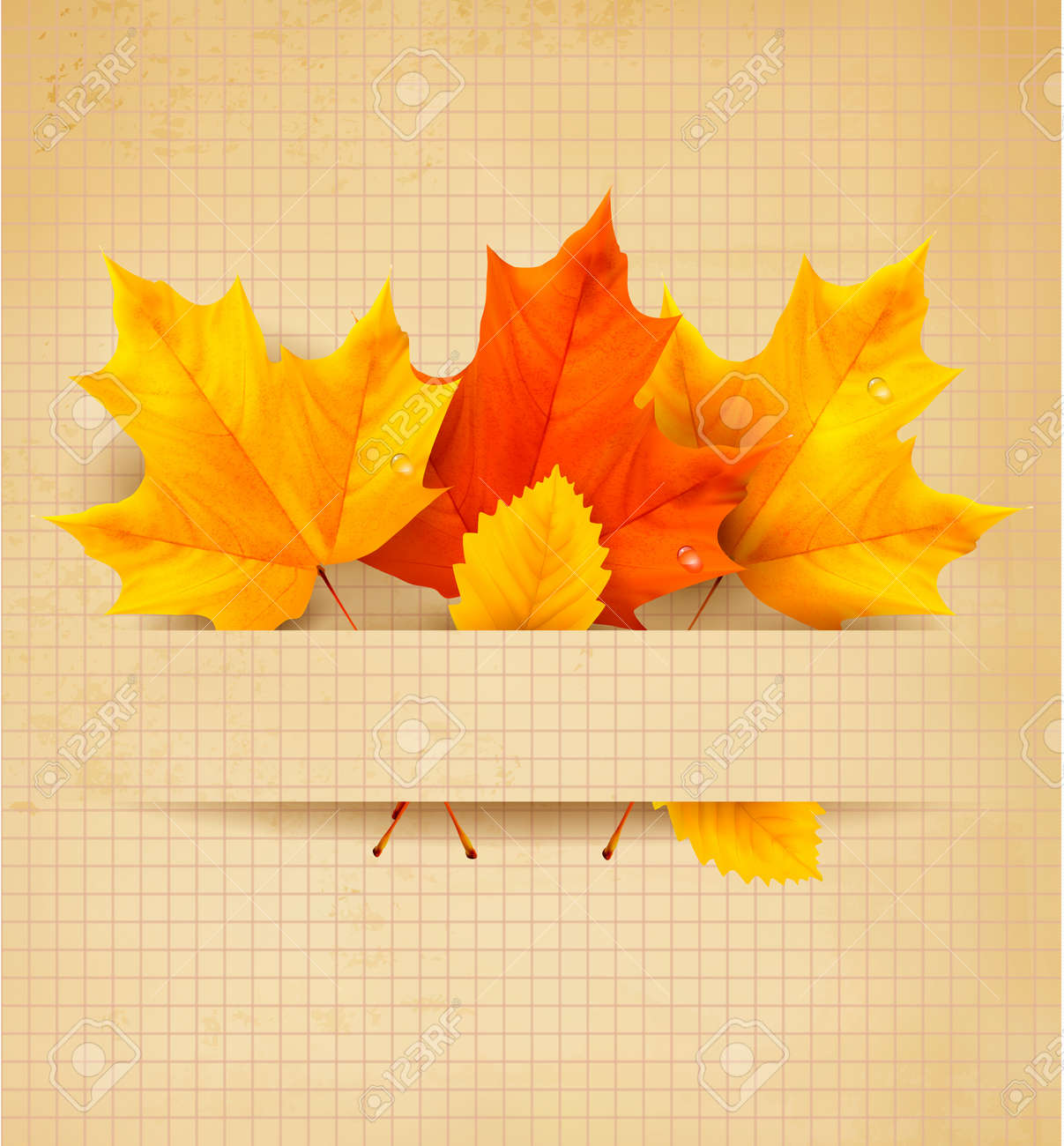 Colorful autumn leaves on a old paper  Back to school background Stock Vector - 14897424