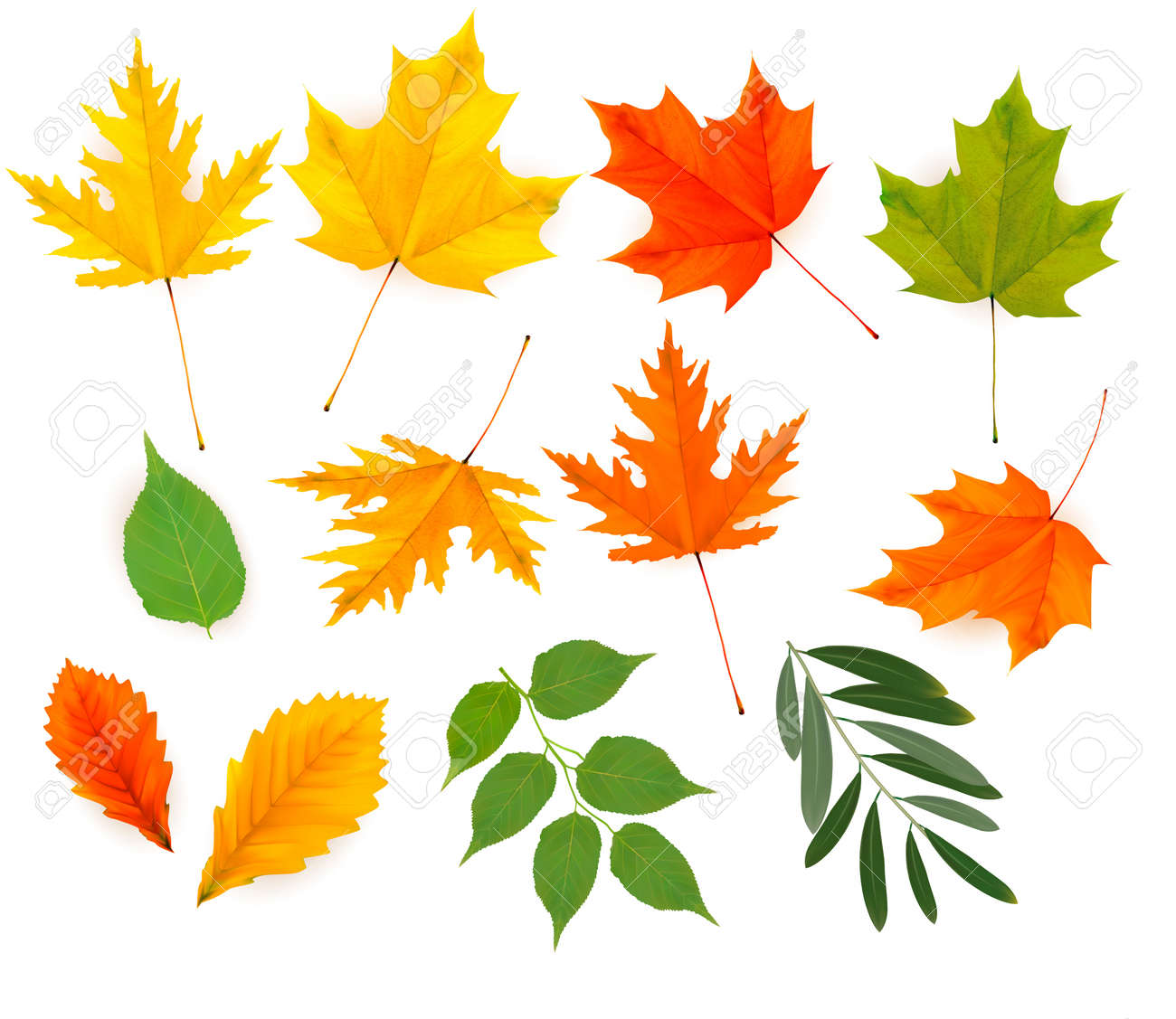 Set of colorful autumn leaves. Stock Vector - 15400399