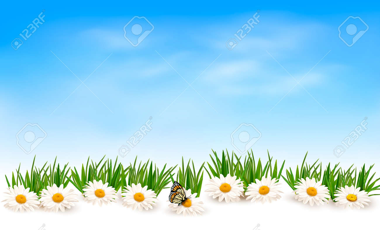 green grass blue sky flowers illustration nature background with green grass and flowers blue sky vector stock 31561925 background with green grass and flowers blue sky