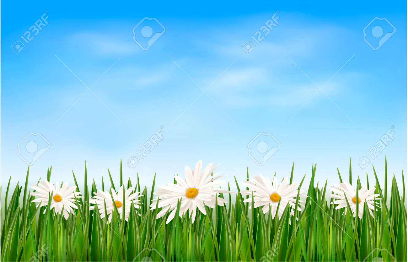 green grass blue sky flowers flower wallpaper nature background with green grass and flowers blue sky vector stock 19902328 background with green grass and flowers blue sky