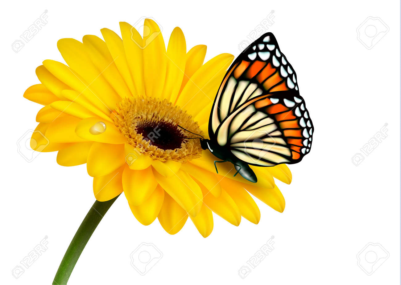 Superbe Nature Summer Yellow Flower With Butterfly. Vector Illustration. Stock  Vector   20192965