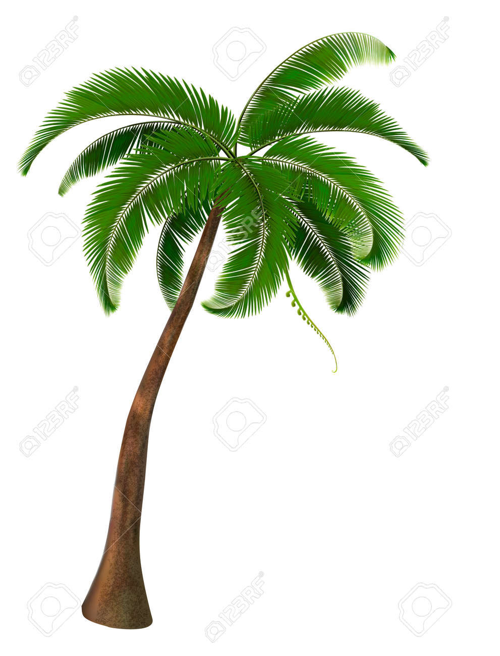 palm tree vector royalty free cliparts vectors and stock