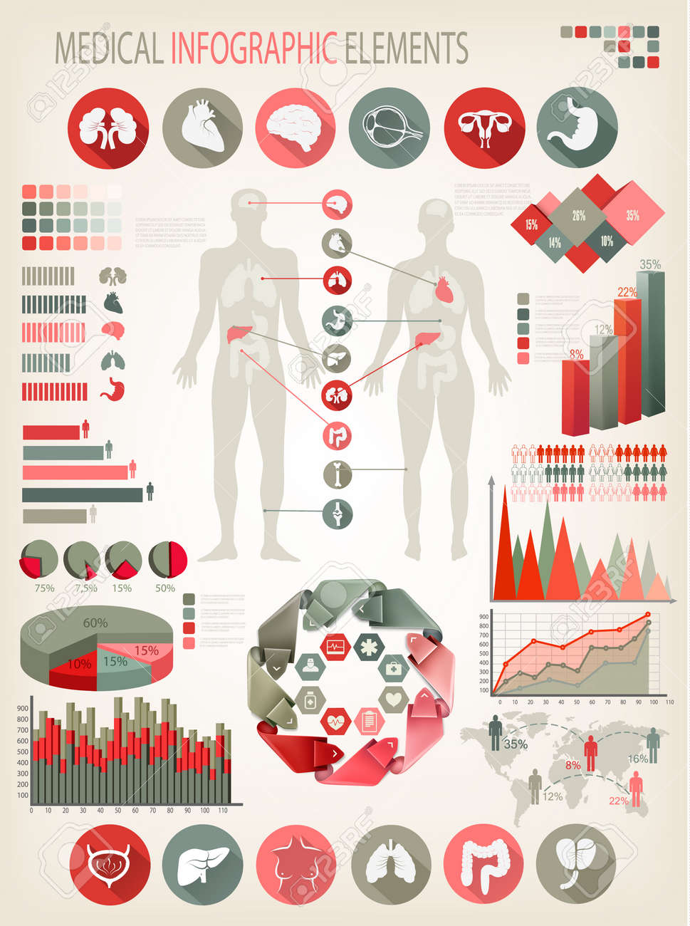Medical infographics elements. Human body with internal organs. Vector. Stock Vector - 27954390