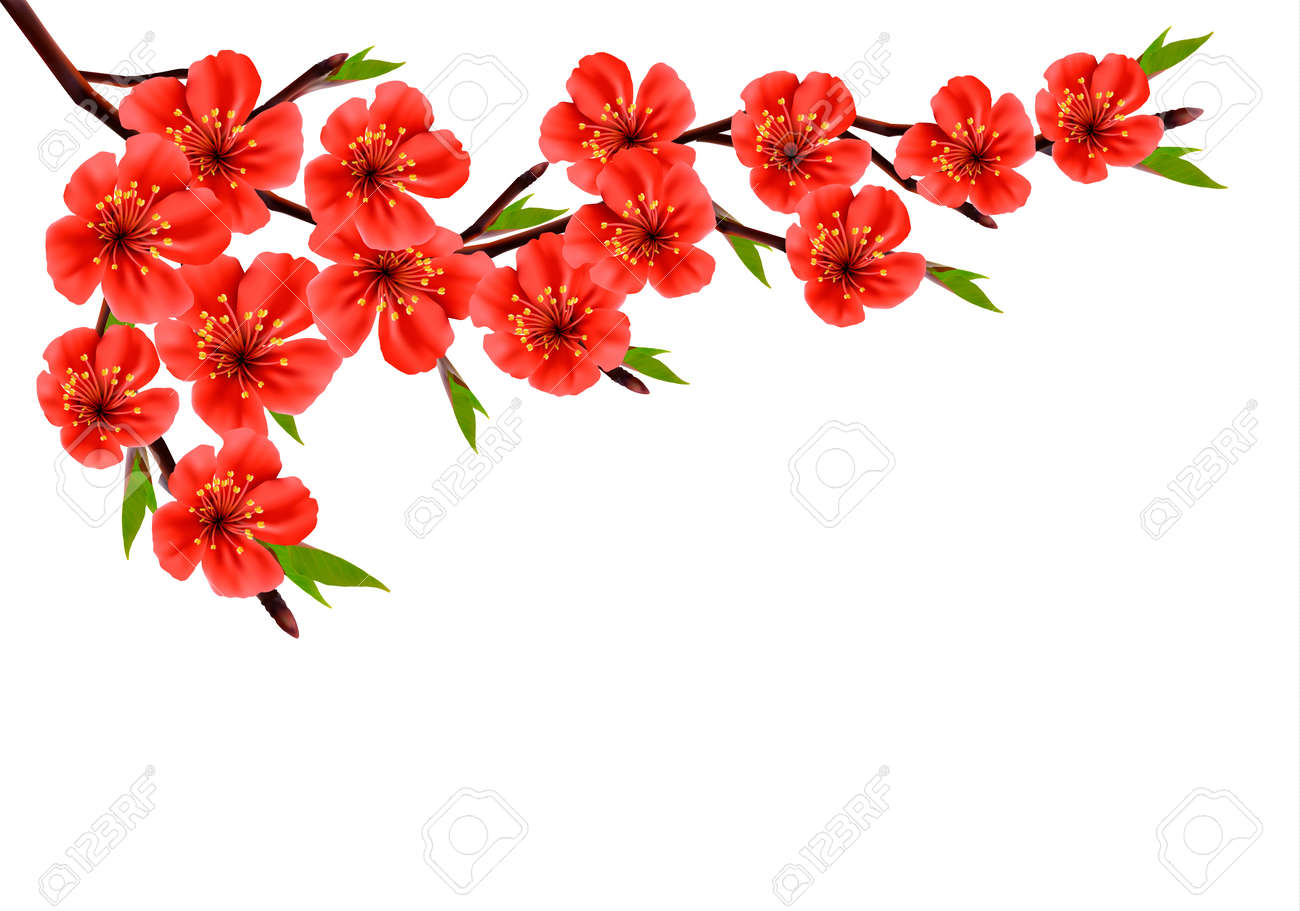 Spring Background With Blossom Branch Of Red Flowers Vector Royalty