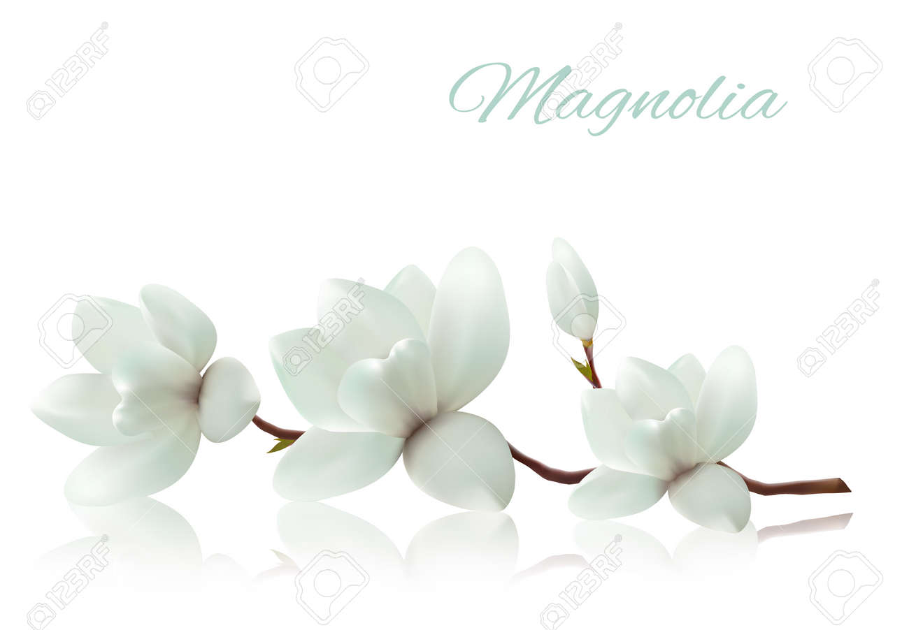 898 Magnolia Tree Cliparts, Stock Vector And Royalty Free Magnolia ...