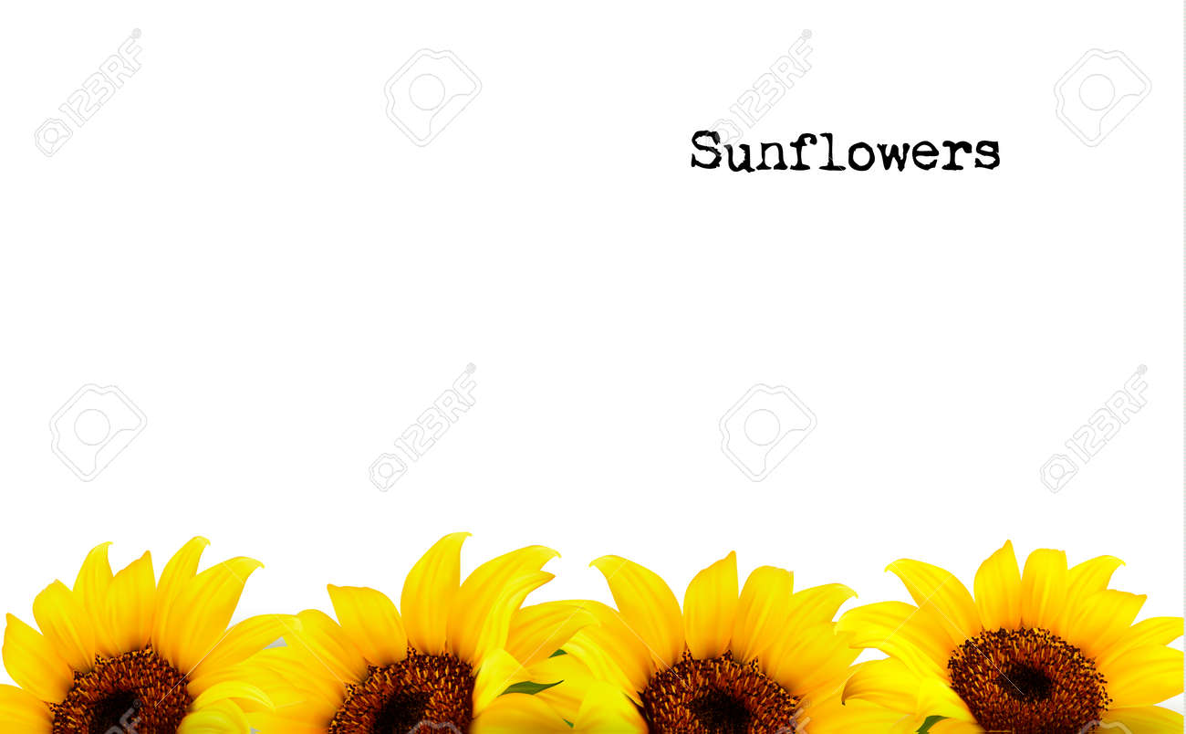Nature Background With Yellow Sunflowers. Vector - 43249899