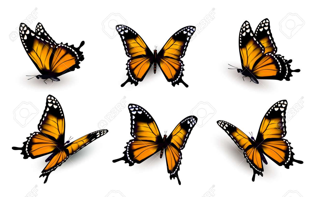 Six butterflies set. - 51007433