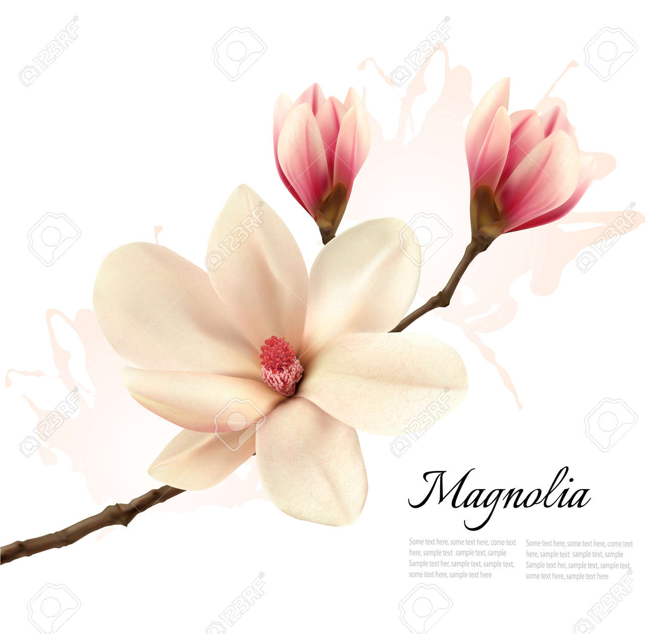 Beautiful Magnolia Flower Background Vector Royalty Free Cliparts