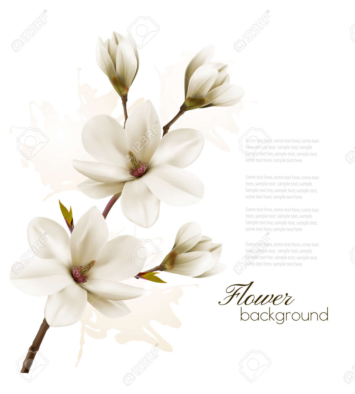 Spring Background With Blossom Brunch Of White Magnolia Vector