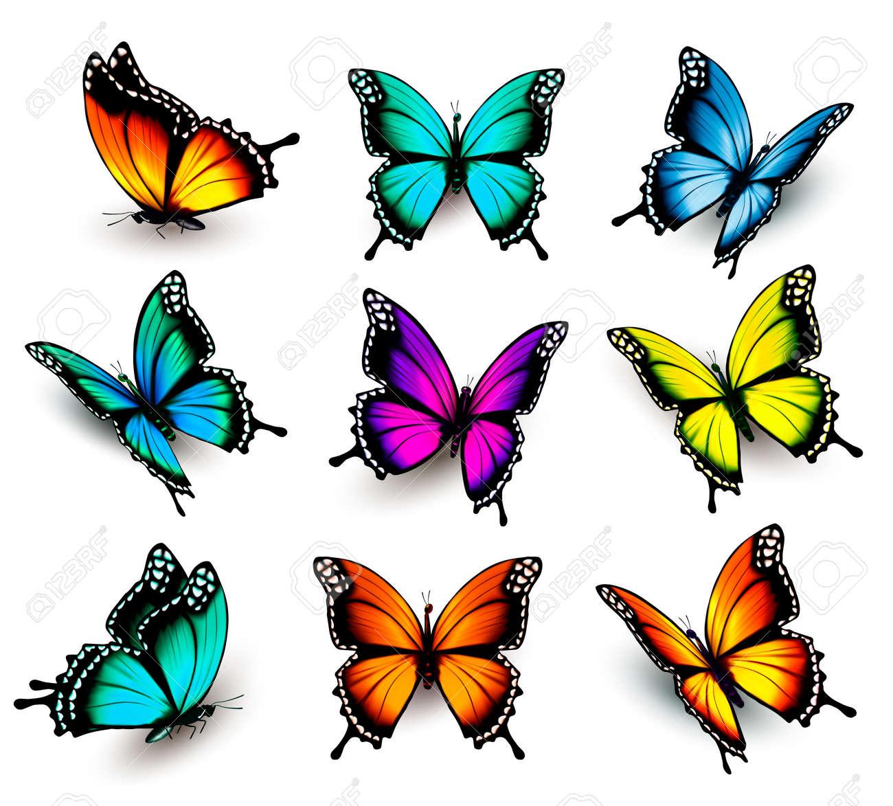Fantástico Mariposa Enmarcado Colección de Imágenes - Ideas para ...