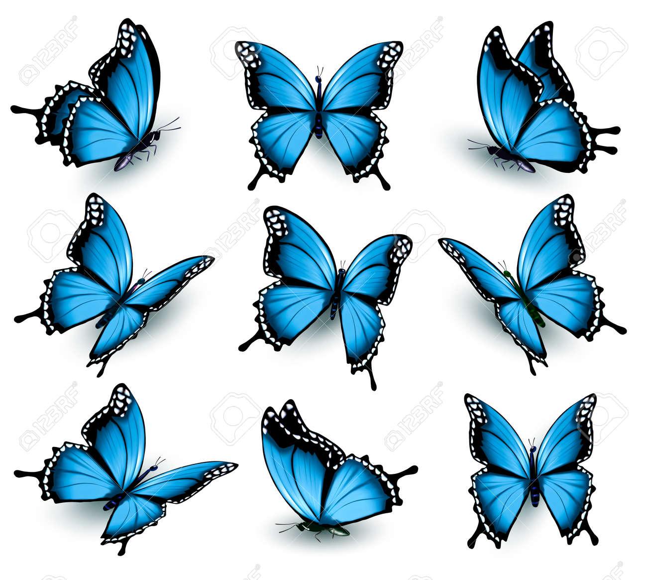 美しい青い蝶のセットです。のイ...