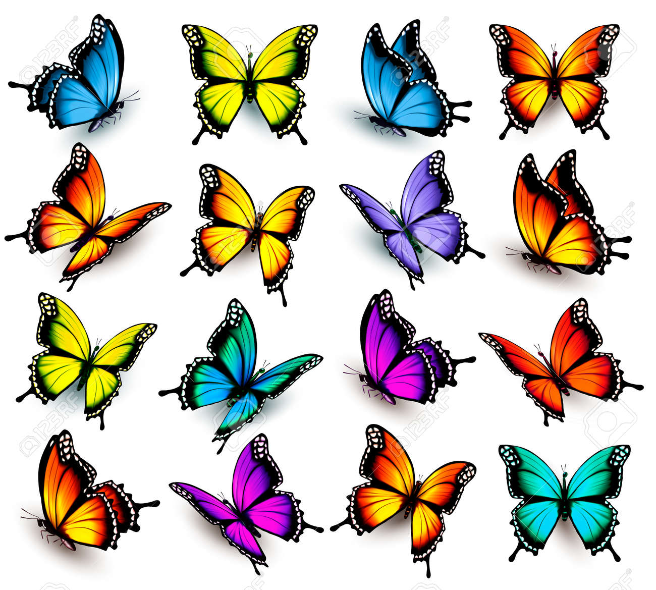 Big collection of colorful butterflies. Vector - 57231221