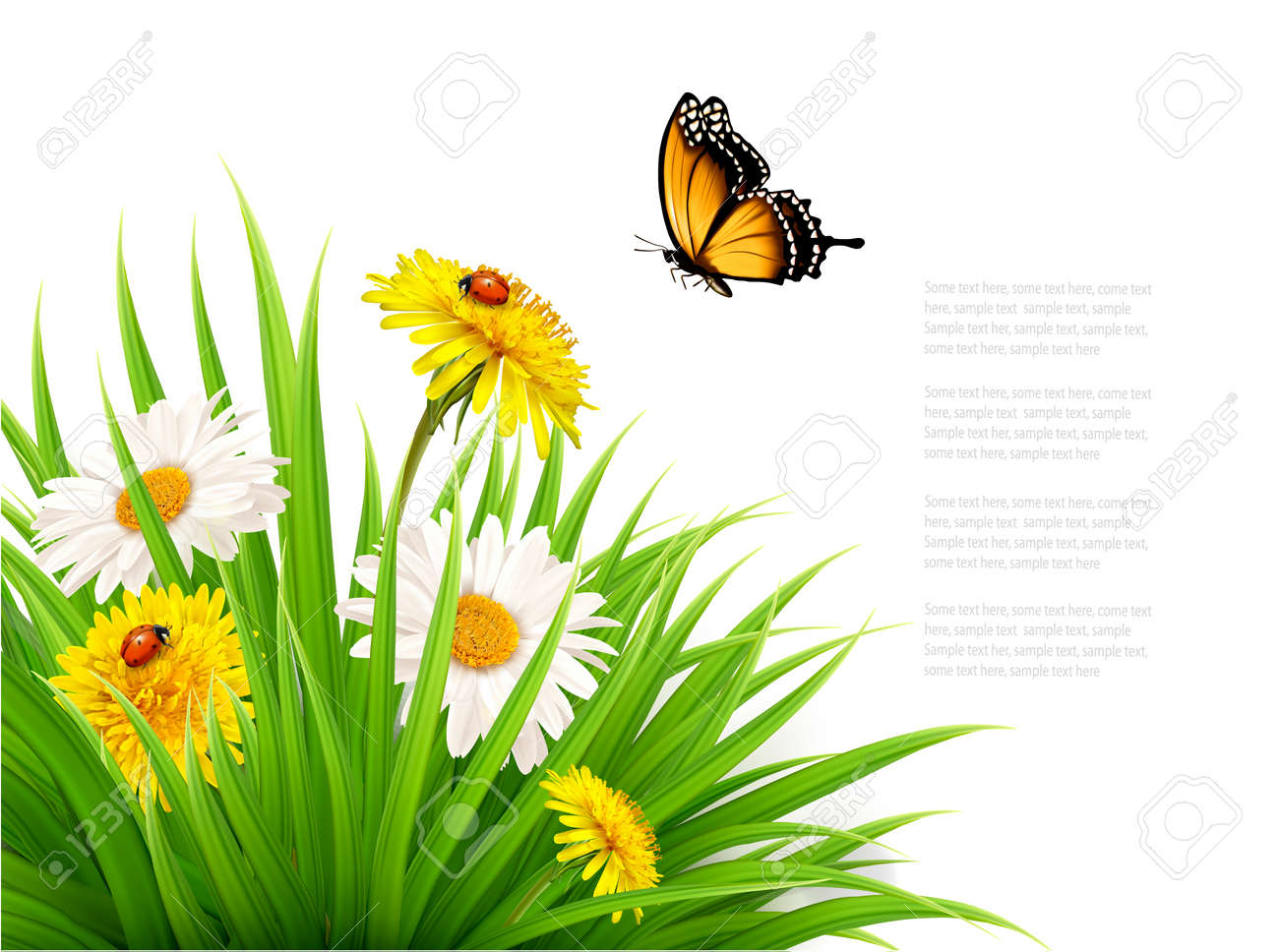 Nature summer background with daisy flower with butterfly. Vector illustration. - 57231236