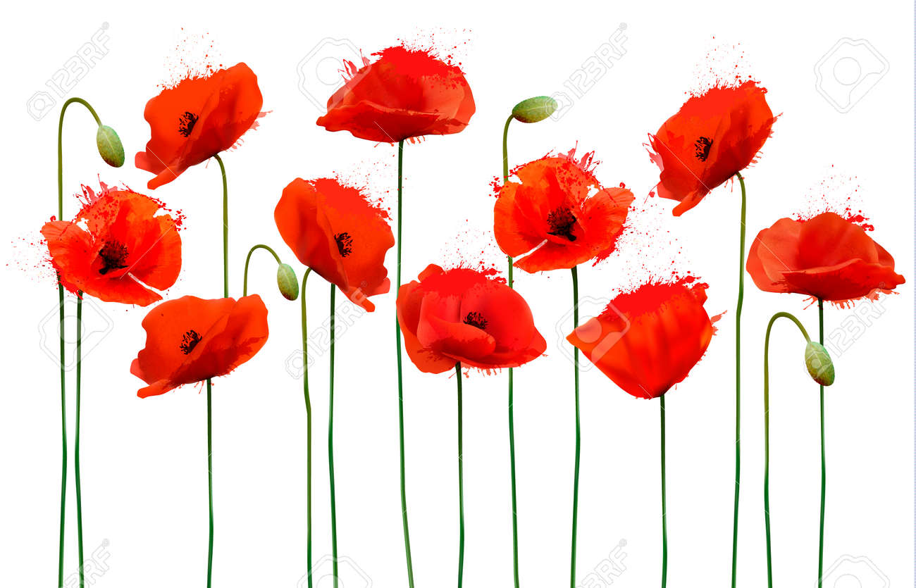 Abstract Background With Red Poppies Flowers Vector Royalty Free