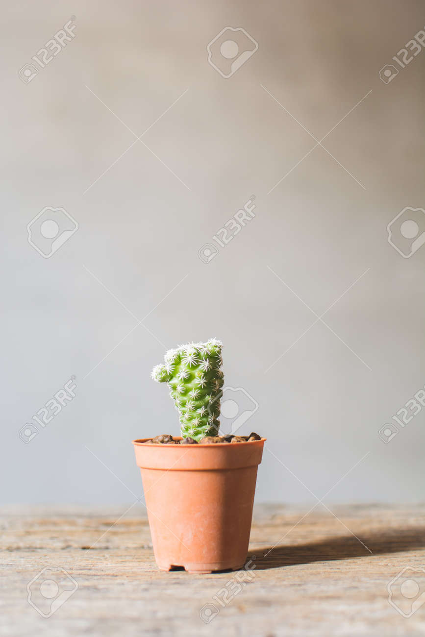 Little beautiful cactus  wood background , hipster tone, soft focus Stock Photo - 73493148