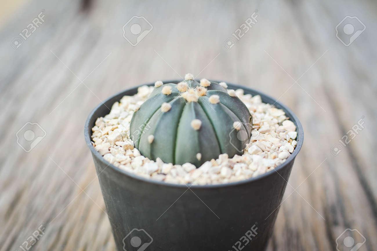 Little beautiful cactus  wood background , hipster tone Stock Photo - 73495235