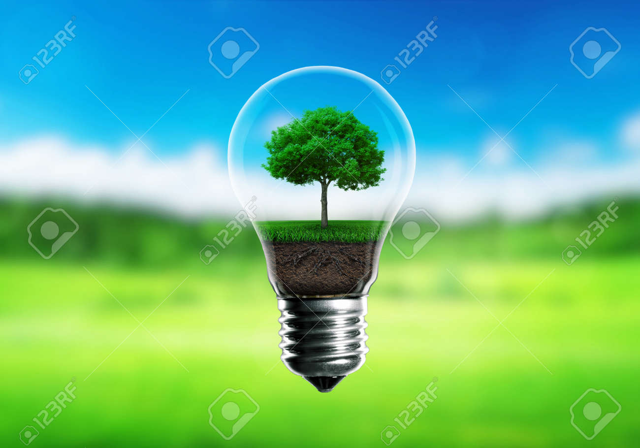Green seedlings in a light bulb alternative energy concept, green blurred background. - 48314881
