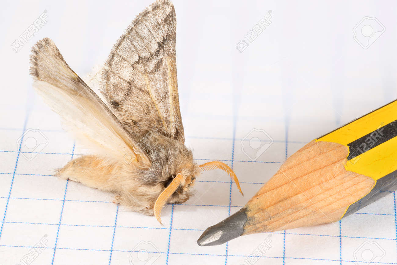 macro view of a flurry moth landed over the quad paper of a graph