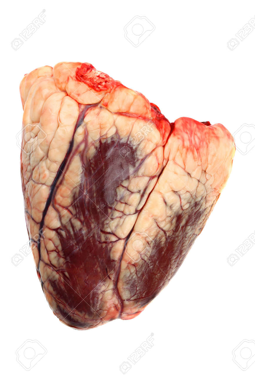 Raw Beef Heart Isolated On White Stock Photo Picture And Royalty