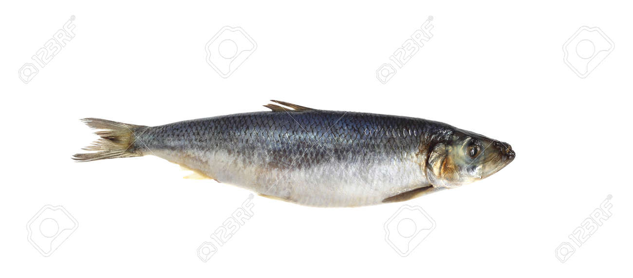 Salted herring isolated on white background Stock Photo - 18233546