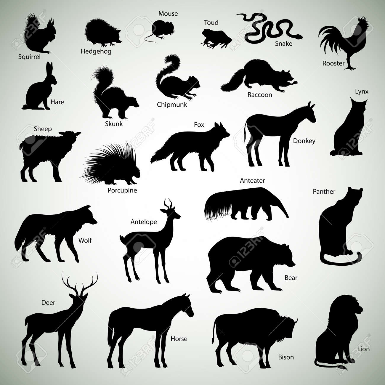 309 Raccoon Horse Cliparts, Stock Vector And Royalty Free Raccoon ...