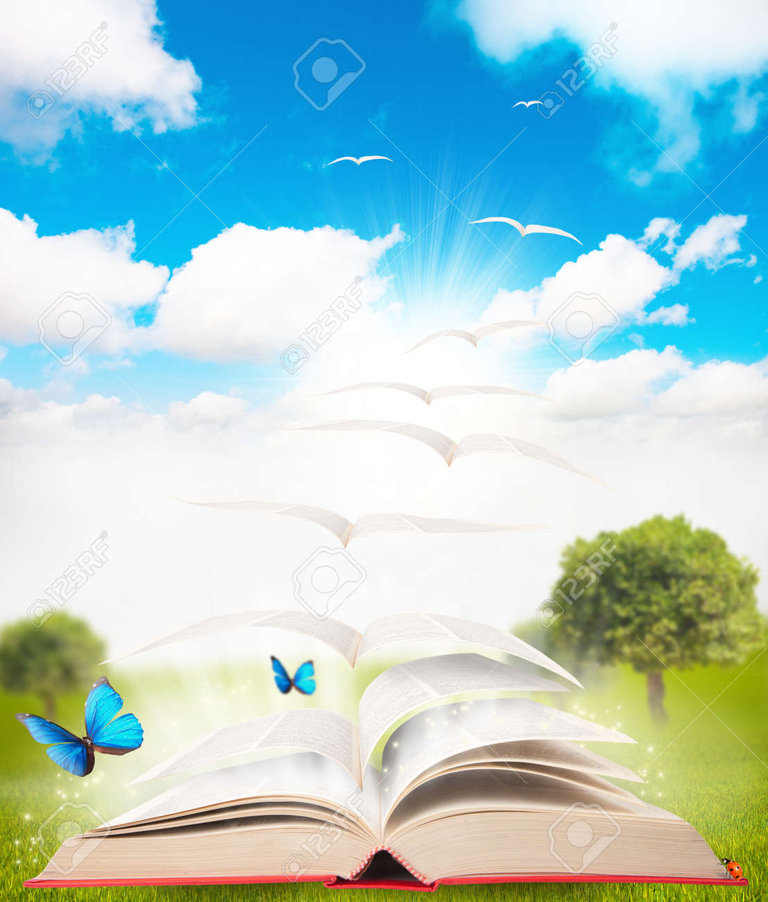 book that turns into a bird Stock Photo - 11309968