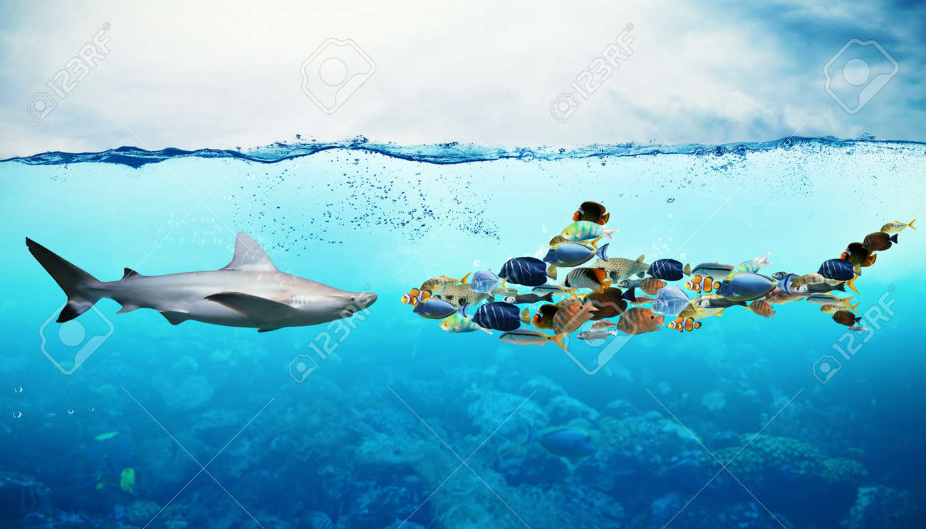 Shark against a set of fish underwater - 51891452