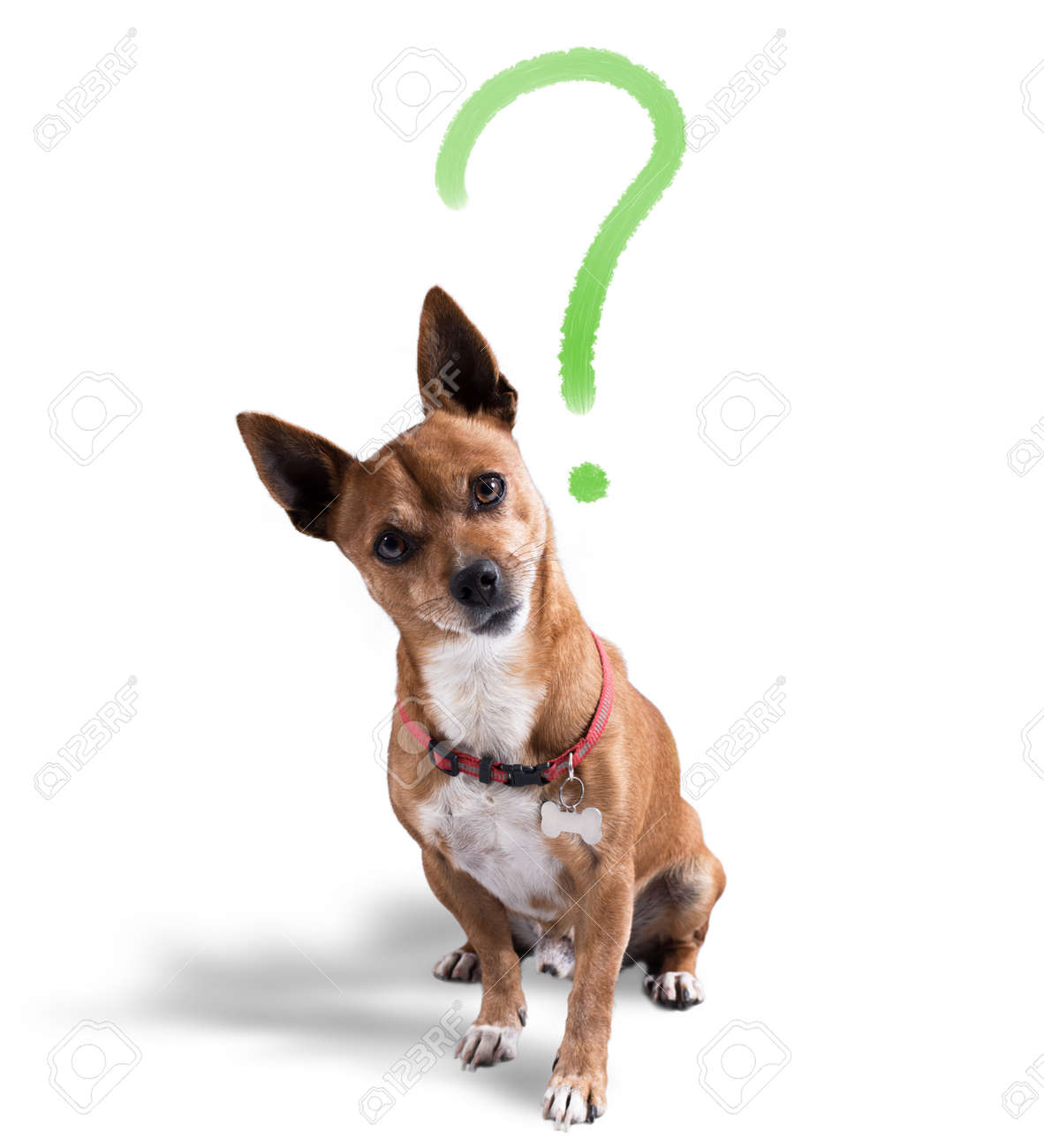 Dog with quizzical expression Standard-Bild - 73105920