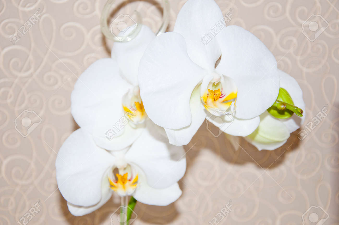 Beautiful Orchid Flower White Color With Yellow Middle In Petals
