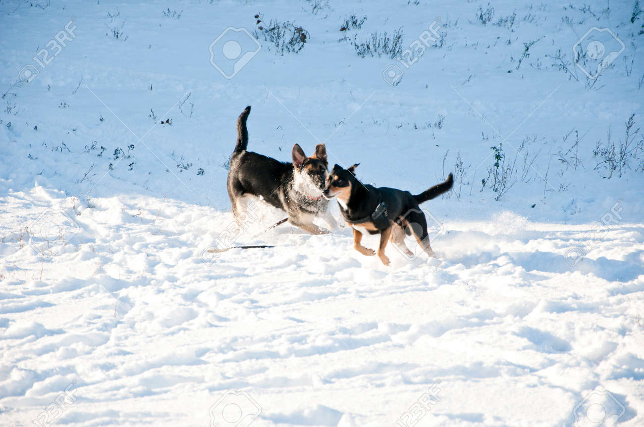 Schöne Süße Schwarze Und Braune Hunde Haustier Freunde Terrier Und ...