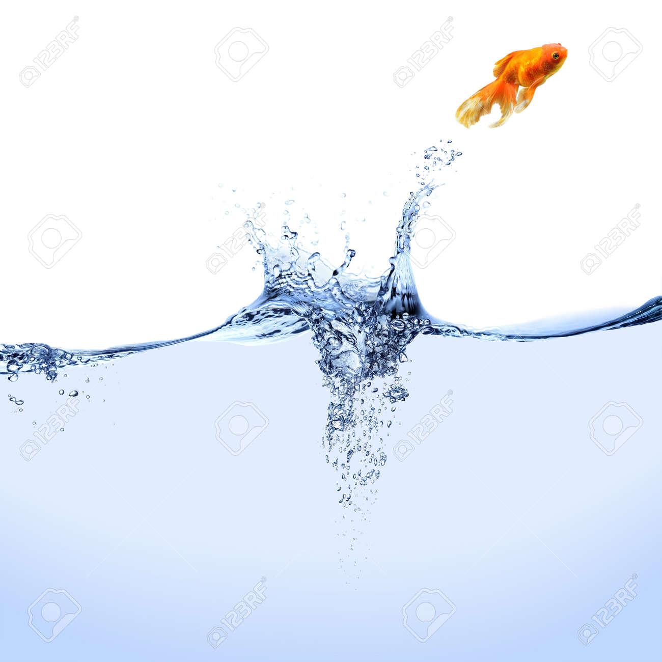 i pesci saltano fuori dall'acquario