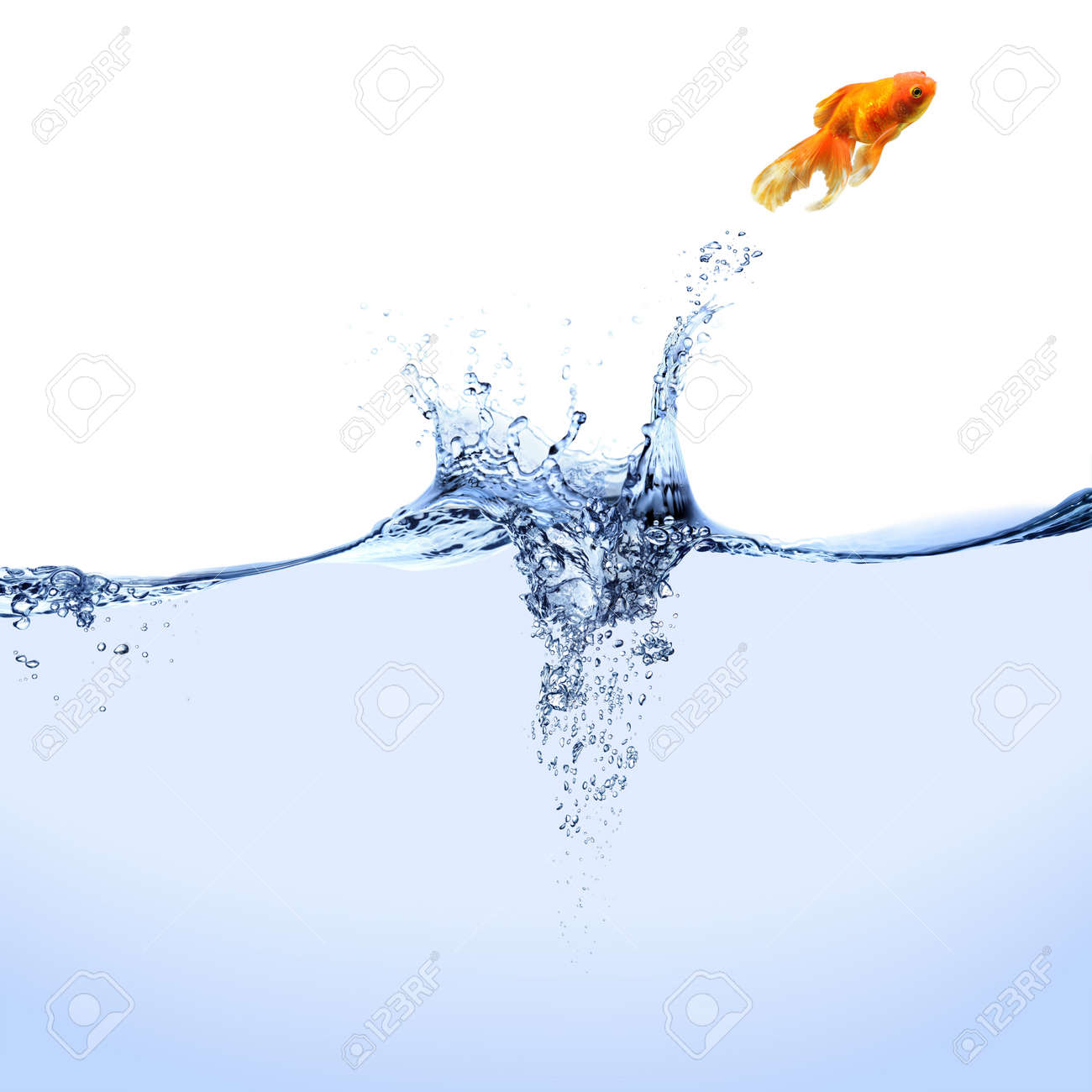 A goldfish jumping out of the water. - 4581342