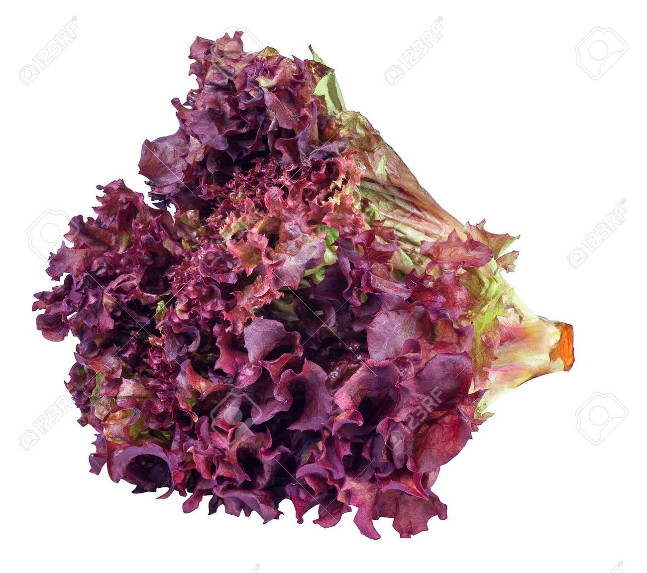 sheaf of purple lettuce isolate. Fresh vegetable salad Lollo Rosso - 58146173