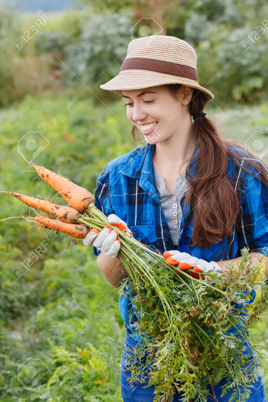 Gardening. Woman with organic carrots in a vegetable garden. Happy girl harvesting carrots in field. Gardener with carrots in garden. Harvest. Young farmer harvesting carrots. - 62220777