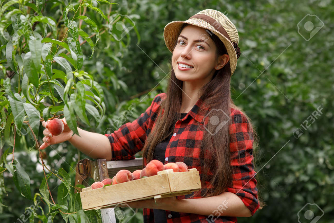 woman harvesting peaches - 82691181