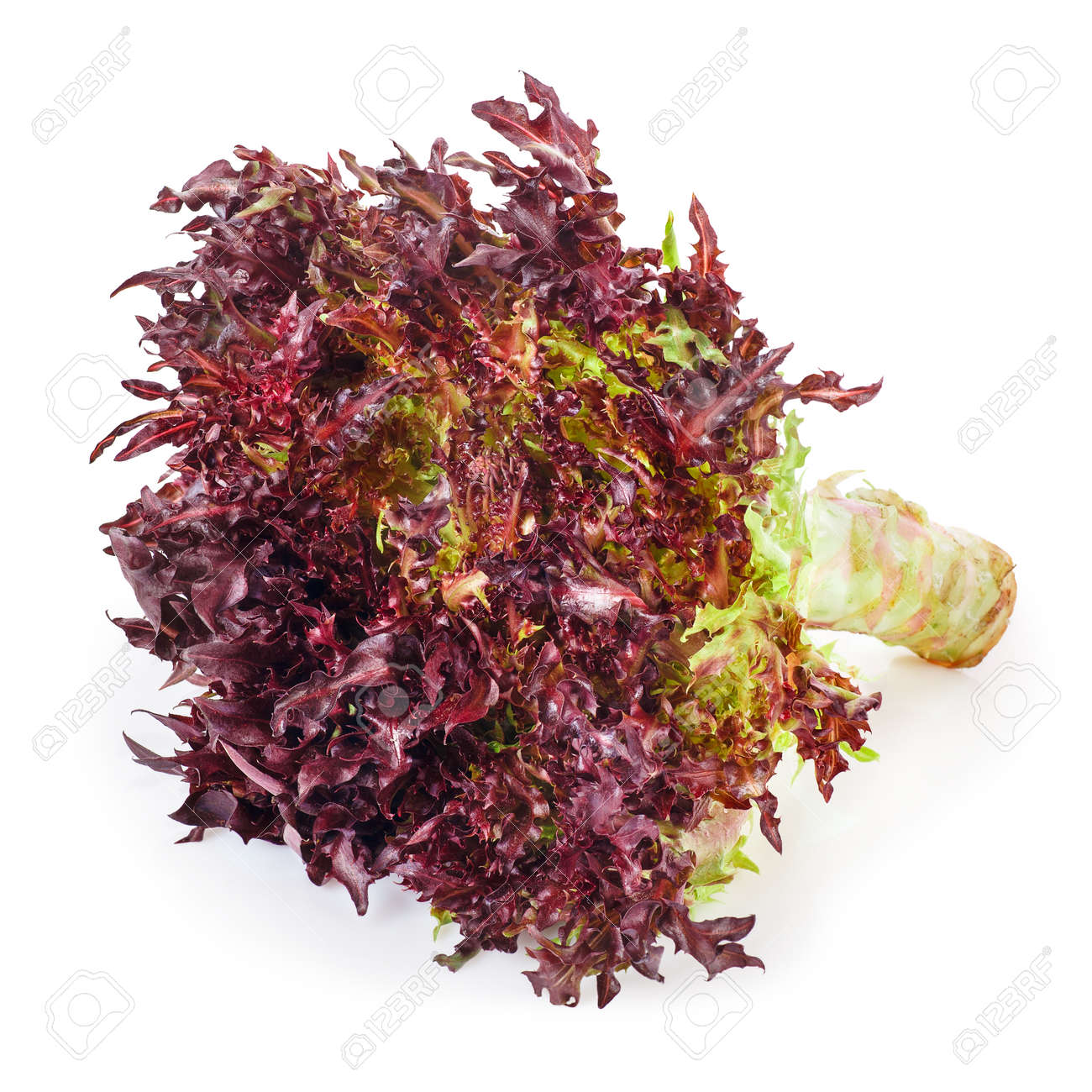 Red Frisee Lettuce Stock Photo Picture And Royalty Free Image Image 83601998,Sacagawea Coin 2000 P Sacagawea Dollar Error
