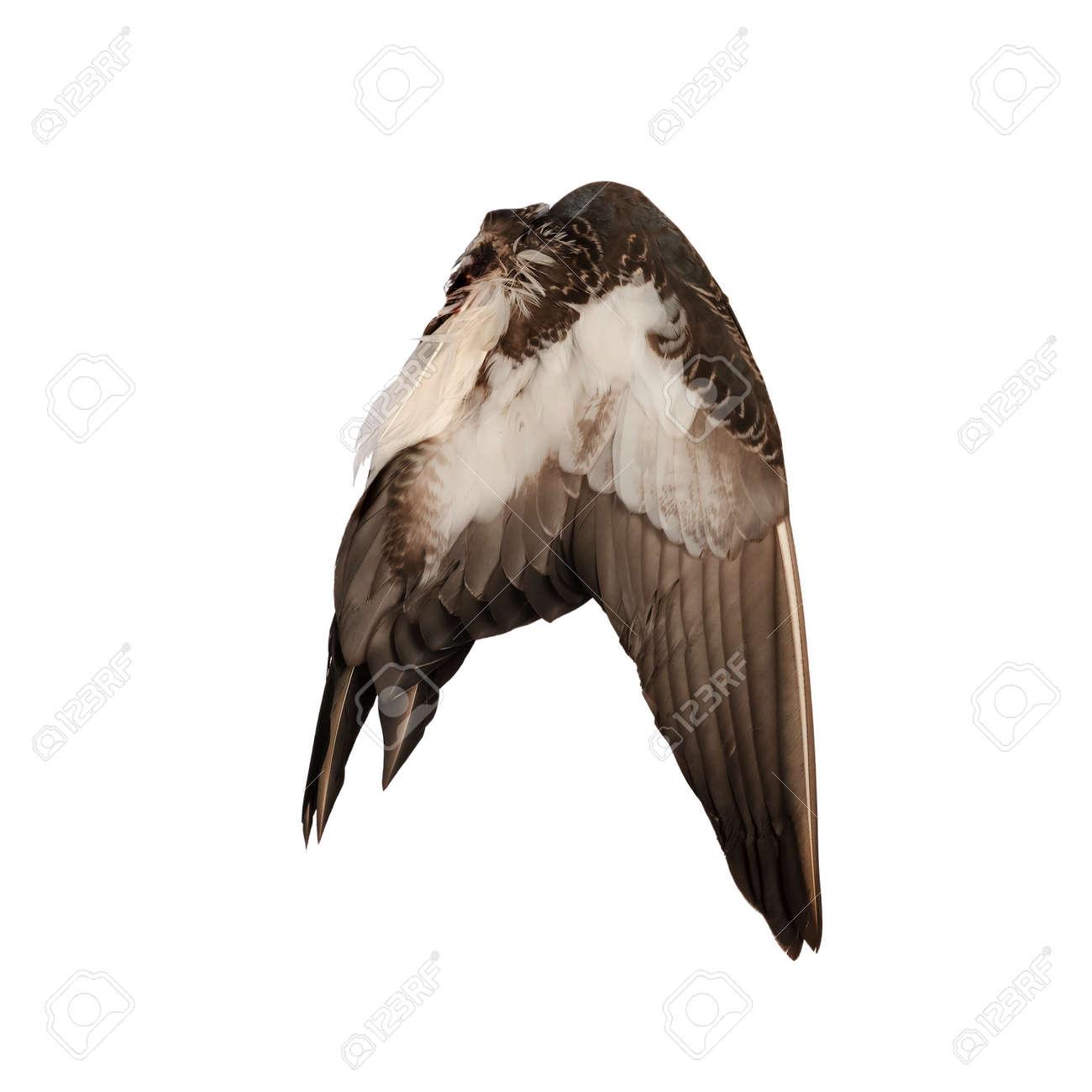 Fondo Real Del Pájaro Del ángel Del Ala Real Del Pájaro Del Pato ...