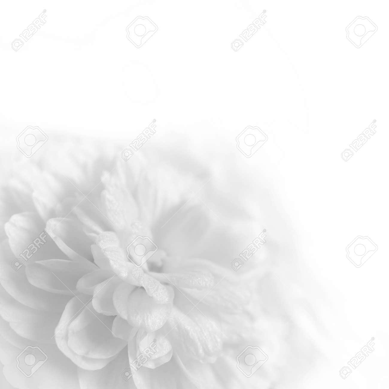 Weisse Blumen Auf Einem Weissen Hintergrund Lizenzfreie Fotos Bilder