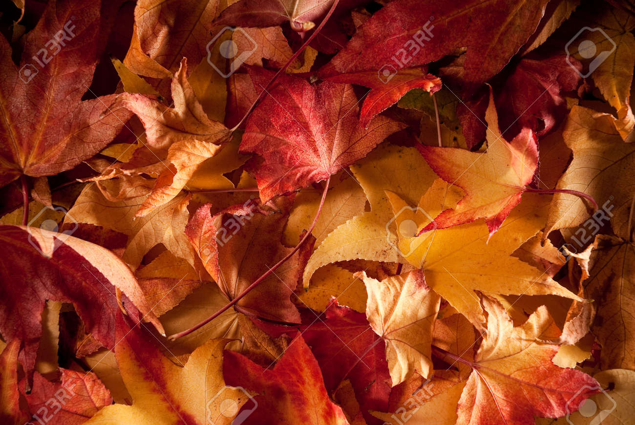 colourful carpet of dried leafs in autumn Stock Photo - 8014347