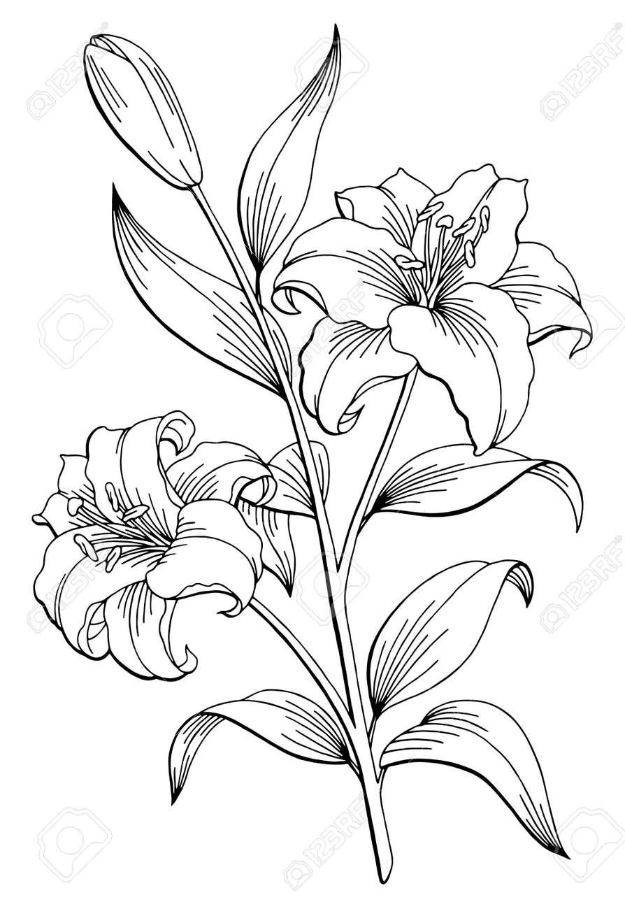 ユリ花グラフィック白黒分離スケッチ イラストのイラスト素材ベクタ