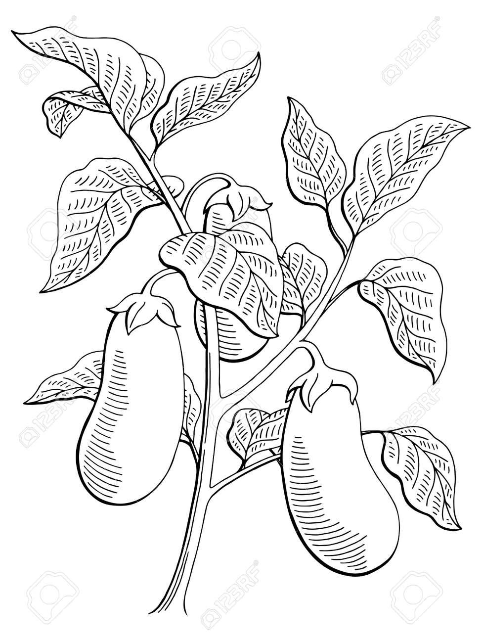 Eggplant Graphic Bush Plant Black White Isolated Sketch Illustration