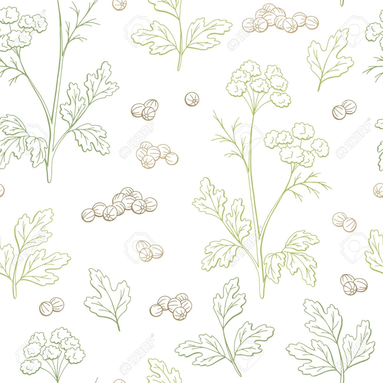 Coriander cilantro plant graphic color seamless pattern background sketch illustration vector - 104772619