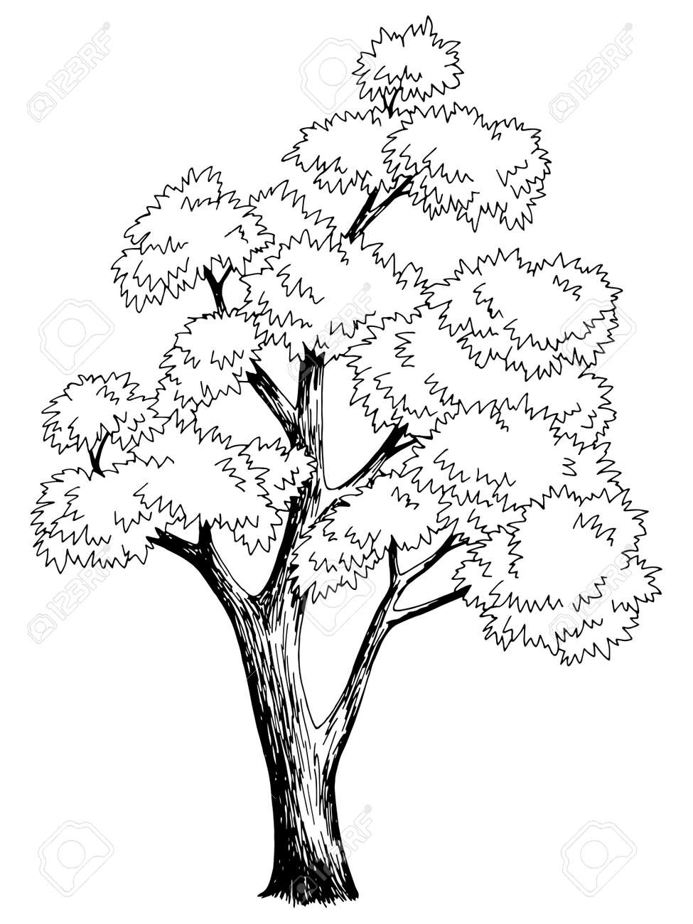 Maple tree graphic black white isolated sketch illustration vector - 155728872