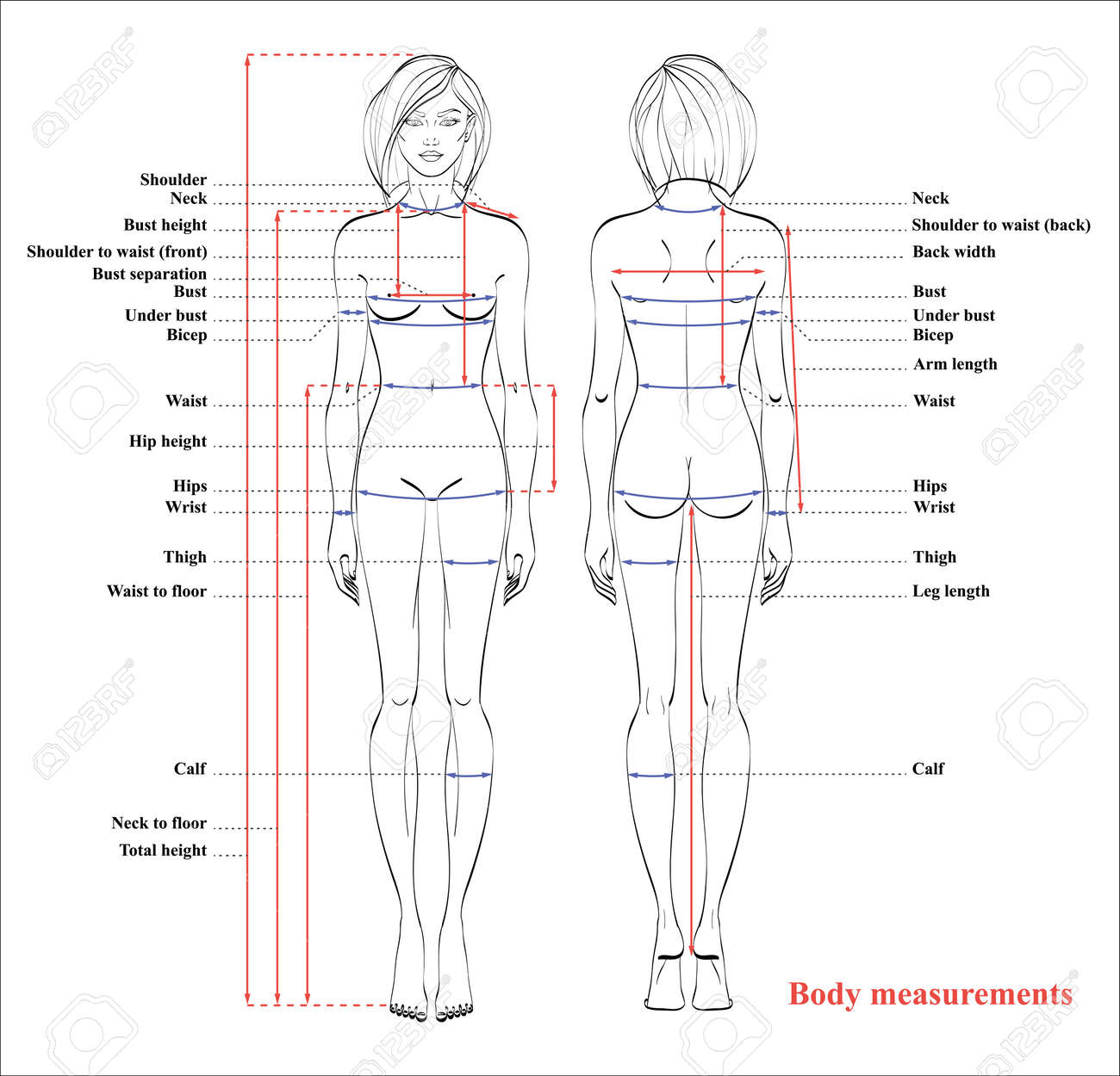 Standard Body Measurement Diagram Female - Car Wiring Diagrams ...