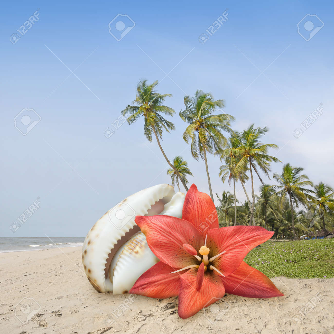 Flower on the beach in a tropical island. Stock Photo - 10411926