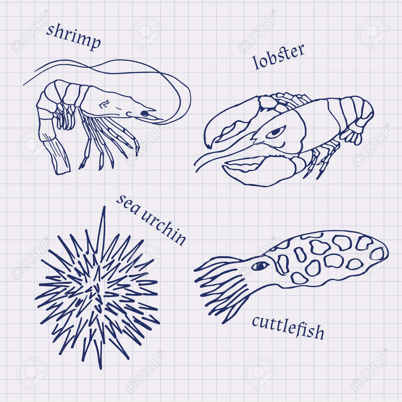 Drawings in their notebooks in a cage of marine animals and drawings in their notebooks in a cage of marine animals and seafood cuttlefish lobster pooptronica Image collections