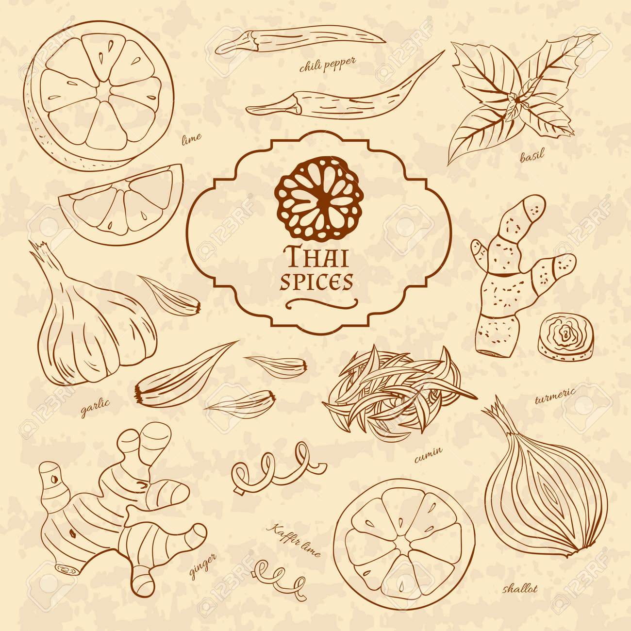 Set of spices cuisines of Thailand on old paper in vintage style. Vector illustration - 50566281