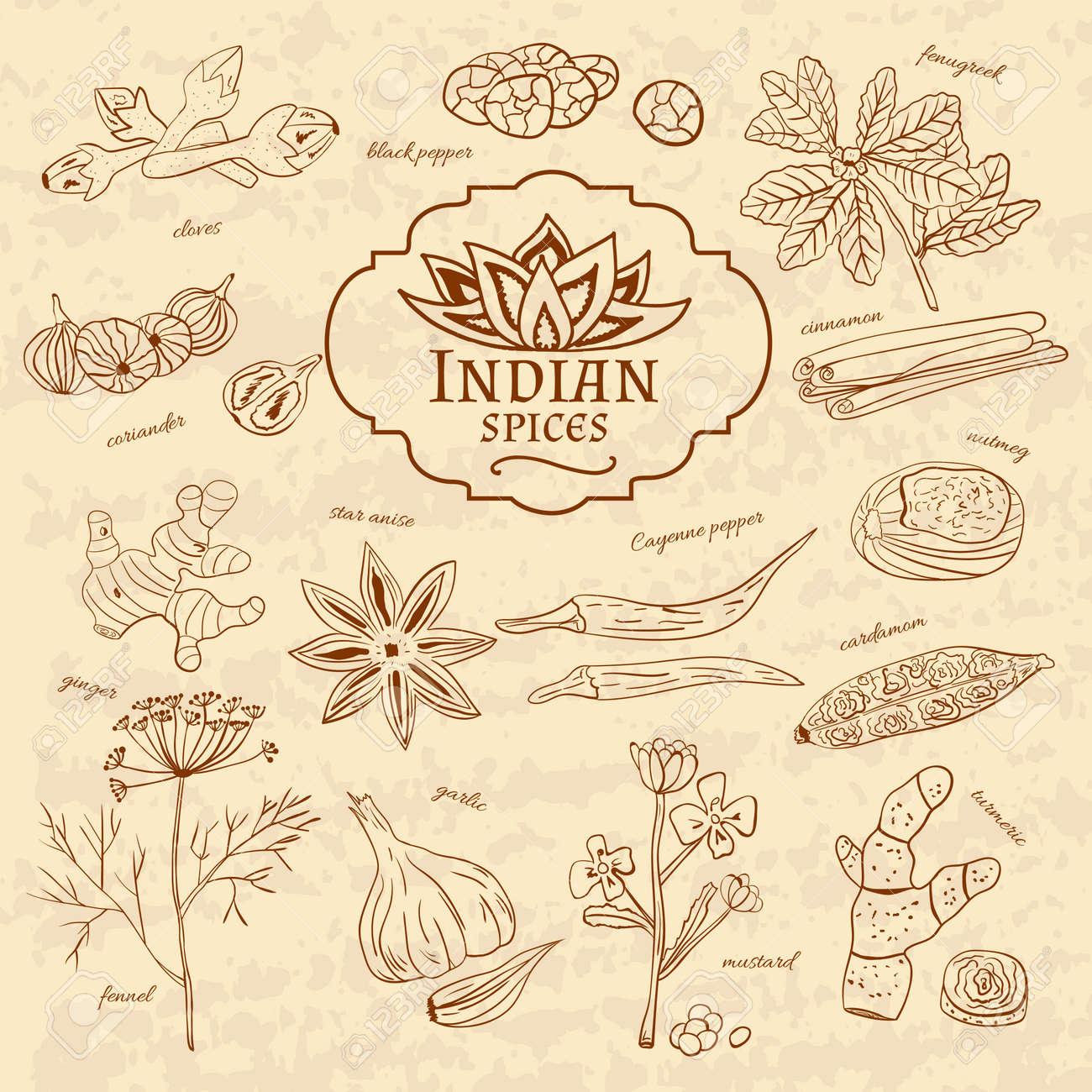 Set Von Gewürzen Und Kräutern Küchen Von Indien Auf Altem Papier Im ...