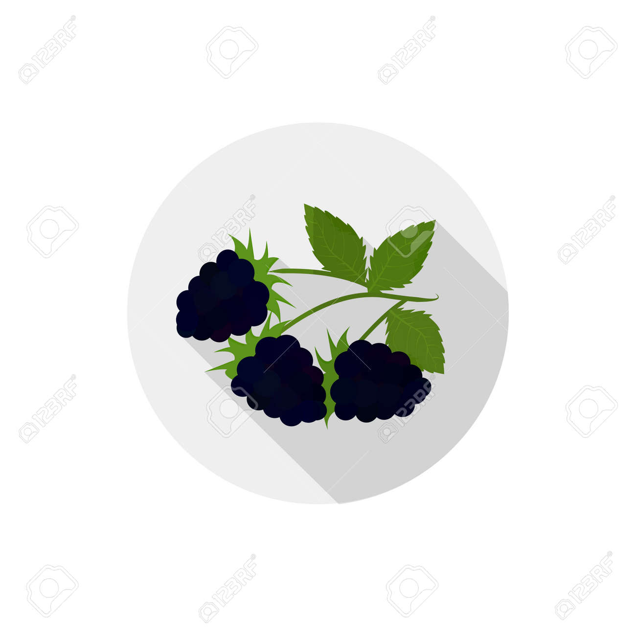 Isolated flat icon of vegetarian eating berries on a white background. Ripe black blackberries - 50592295
